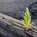 pflanze aus stammphotocase4ccmrjsf1-1.jpg